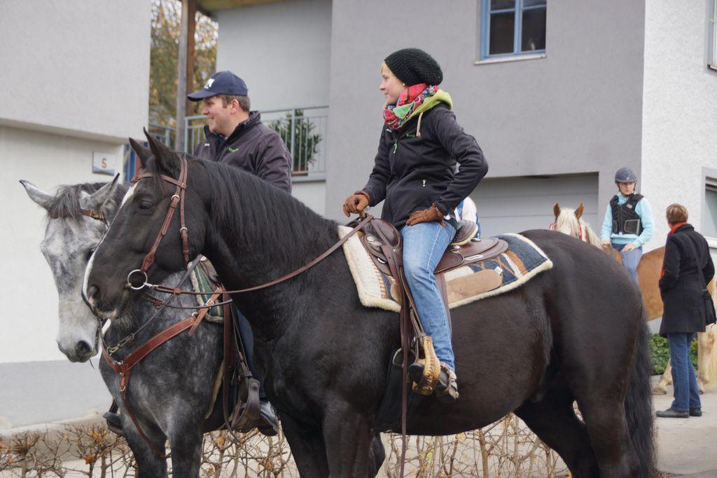 Pferdefest 2015